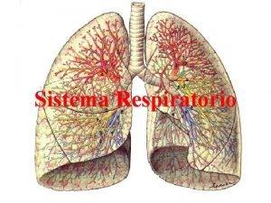 Sistema Respiratorio ESQUEMA APARATO RESPIRATORIO CAVIDAD NASAL NARIZ