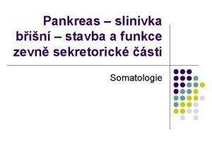 Pankreas slinivka bin stavba a funkce zevn sekretorick