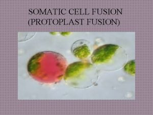 SOMATIC CELL FUSION PROTOPLAST FUSION Group Members Muhammad