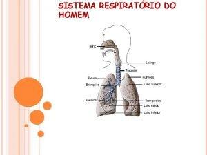 SISTEMA RESPIRATRIO DO HOMEM Sistema Respiratrio do homem