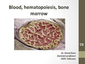Blood hematopoiesis bone marrow TB Dr David Dora