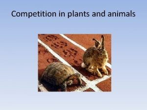 Competition in plants and animals Possible relationships between