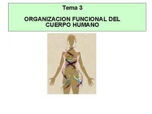 Tema 3 ORGANIZACION FUNCIONAL DEL CUERPO HUMANO Tema