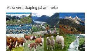 Auka verdiskaping p ammeku Storfeprosjektet i Sogn og