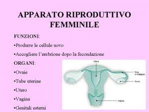 APPARATO RIPRODUTTIVO FEMMINILE FUNZIONI Produrre le cellule uovo