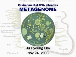 Environmental DNA Libraries METAGENOME Ju Hyoung Lim Nov