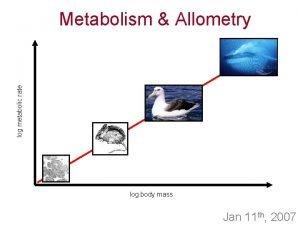 log metabolic rate Metabolism Allometry log body mass