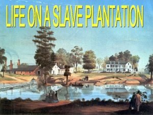 A plantation is a large farm concentrating on