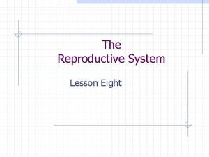 The Reproductive System Lesson Eight Female Reproductive System
