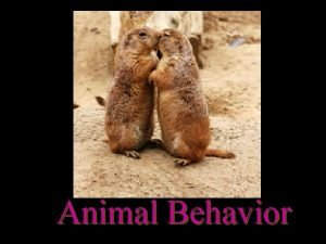 Animal Behavior Animal Behavior p Behavior anything an