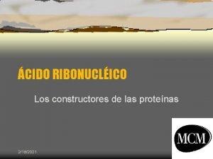CIDO RIBONUCLICO Los constructores de las protenas 2182021