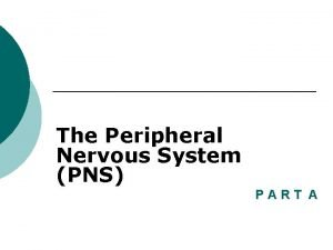 The Peripheral Nervous System PNS PART A Peripheral