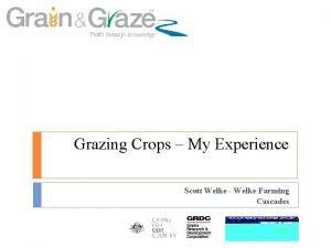 Grazing Crops My Experience Scott Welke Welke Farming