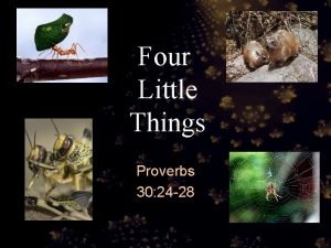 Four Little Things Proverbs 30 24 28 Proverbs