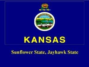 Sunflower State Jayhawk State State symbols Flower Sunflower