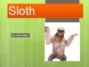 Sloth By Gavin Sidhu Sloths habitat Sloths live