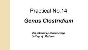 Practical No 14 Genus Clostridium Genus Clostridia G
