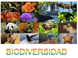 BIODIVERSIDAD BIODIVERSIDAD intra BIODIVERSIDAD ESTRATEGIAS ADAPTATIVAS Generalista BIODIVERSIDAD
