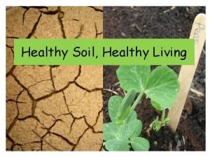 Healthy Soil Healthy Living Where does food come