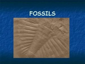 FOSSILS Start with Living Organism The organism can