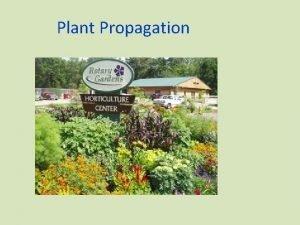 Plant Propagation Plant Propagation The process of increasing