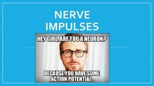 NERVE IMPULSES The neuron membrane Three major types