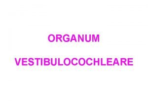 ORGANUM VESTIBULOCOCHLEARE ORGANUM VESTIBULOCOCHLEARE Auris externa Auricula Meatus