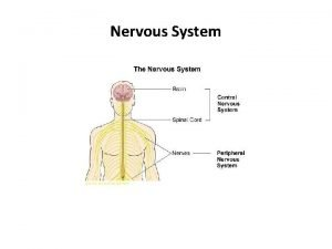 Nervous System Anatomy Physiology Key Terms Afferent Towards