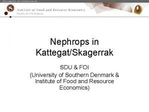 Nephrops in KattegatSkagerrak SDU FOI University of Southern