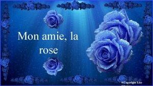 Mon amie la rose Copyright Lise Jolie rose