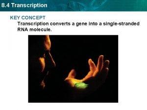 8 4 Transcription KEY CONCEPT Transcription converts a