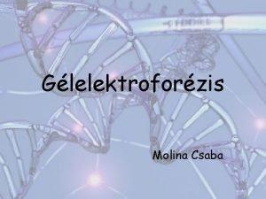 Glelektroforzis Molina Csaba Glelektroforzis Elektroforzises eljrsok Mret szerinti