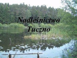 Nadlenictwo Tuczno Krtkie informacje Utworzenie lipiec 1946 roku