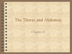 The Thorax and Abdomen Chapter 26 Anatomy of