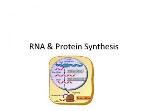 RNA Protein Synthesis I DNA to Genes A