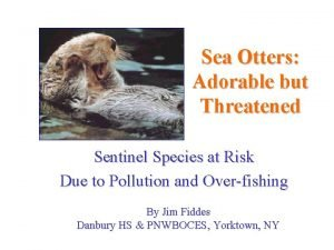 Sea Otters Adorable but Threatened Sentinel Species at