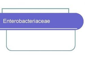 Enterobacteriaceae Enterobacteriaceae l Classification more than 15 different