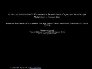 In Vivo Multiphoton NADH Fluorescence Reveals DepthDependent Keratinocyte