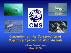 Convention on the Conservation of Migratory Species of
