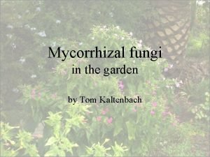 Mycorrhizal fungi in the garden by Tom Kaltenbach