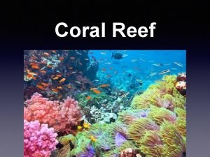 Coral Reef Locations New Caledonia Barrier Reef Length