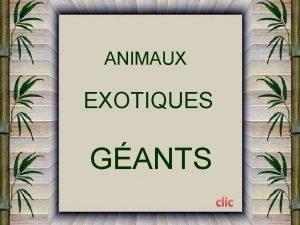 ANIMAUX EXOTIQUES GANTS ESCARGOTS GANTS AFRICAINS LAfrique fait