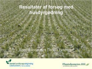Resultater af forsg med husdyrgdning Specialkonsulent Torkild Birkmose