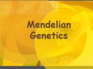 Mendelian Genetics 1 Gregor Johann Mendel Austrian monk