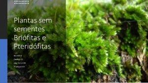 Plantas sementes Brifitas e Pteridfitas Apostila 6 Captulo