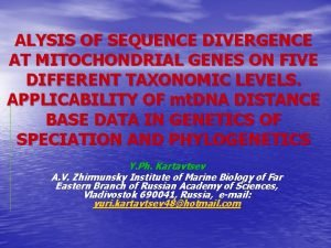 ALYSIS OF SEQUENCE DIVERGENCE AT MITOCHONDRIAL GENES ON