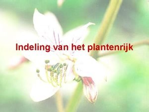 Indeling van het plantenrijk Planten Celwand Celkern Bladgroenkorrels
