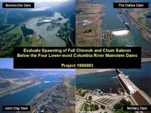 Bonneville Dam The Dalles Dam Evaluate Spawning of