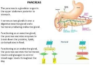 PANCREAS The pancreas is a glandular organ in