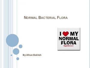 NORMAL BACTERIAL FLORA By Afnan Bakhsh Normal flora
